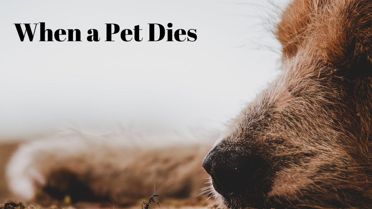 When A Pet Dies At Home