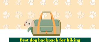 Best dog backpack - Dog hiking backpack