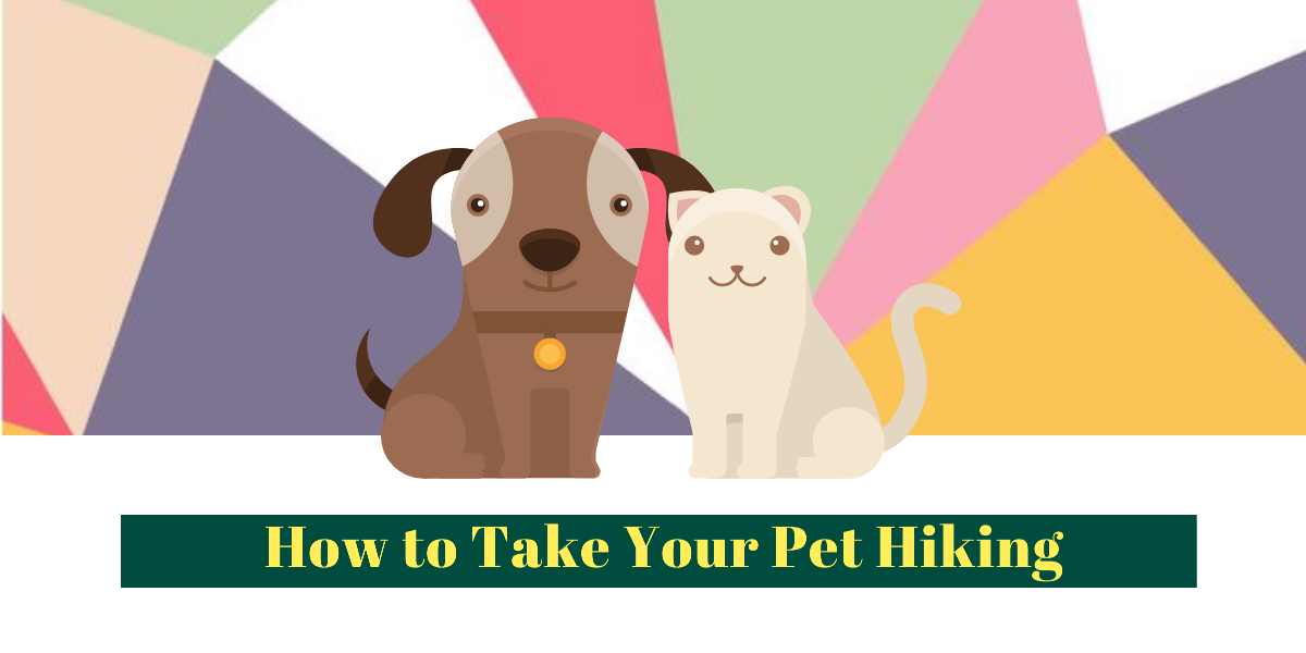 best dog backpack - How to Take Your Dog Hiking